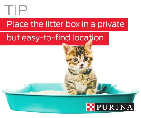 Cats are naturally inclined to use the litter box
