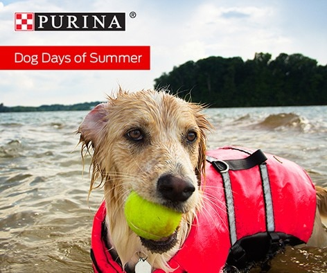Don't forget to take your furry friend on pet-friendly adventures this summer!
