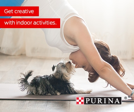 Pets need exercise