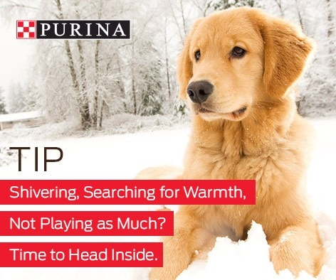 Cold weather playtime tip
