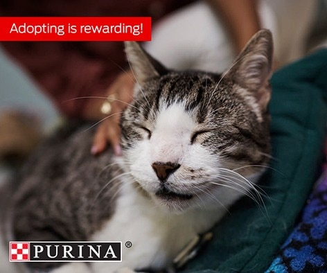 Pet adoption can be so rewarding, and now Petfinder is adding to those rewards!