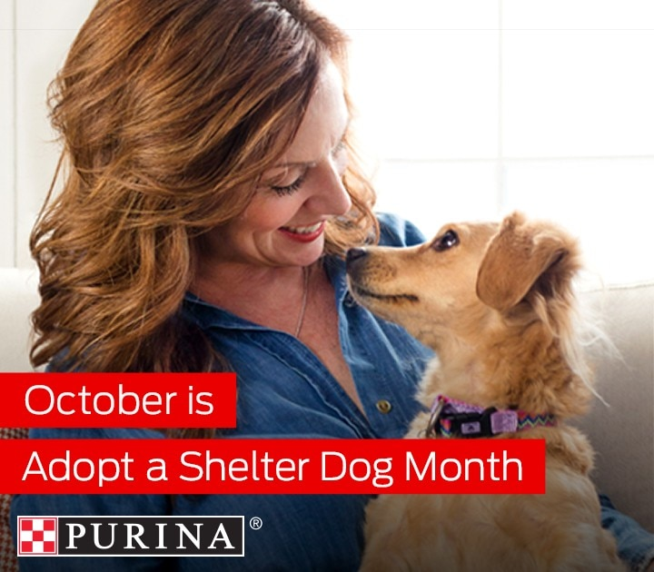 It's Adopt a Shelter Dog Month