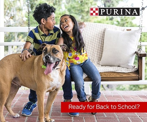 Give your pets some extra love and attention before they lose their favorite playmates to school days