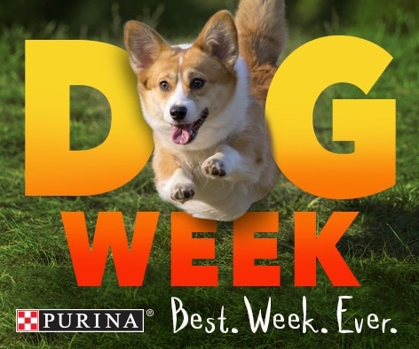 September 18-24 Dog Week