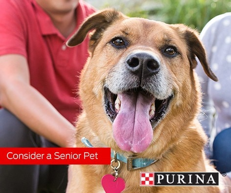 Advantages of a Senior Pet