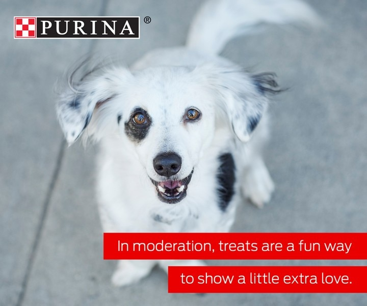 Treats are a great way to reward your pet