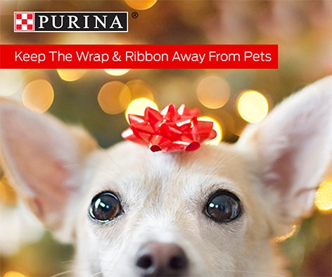'Tis the season of giving, but be sure to keep the wrapping, bows and ribbons away from your pets.