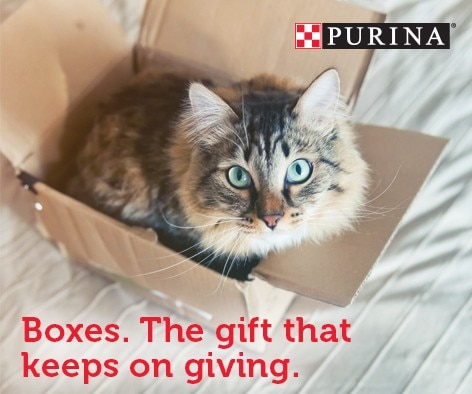 Holiday cat box