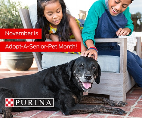 Looking for a calm, good-natured pet – consider a senior!