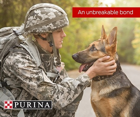 Did you know that dogs can provide more than just companionship to those returning home after serving?