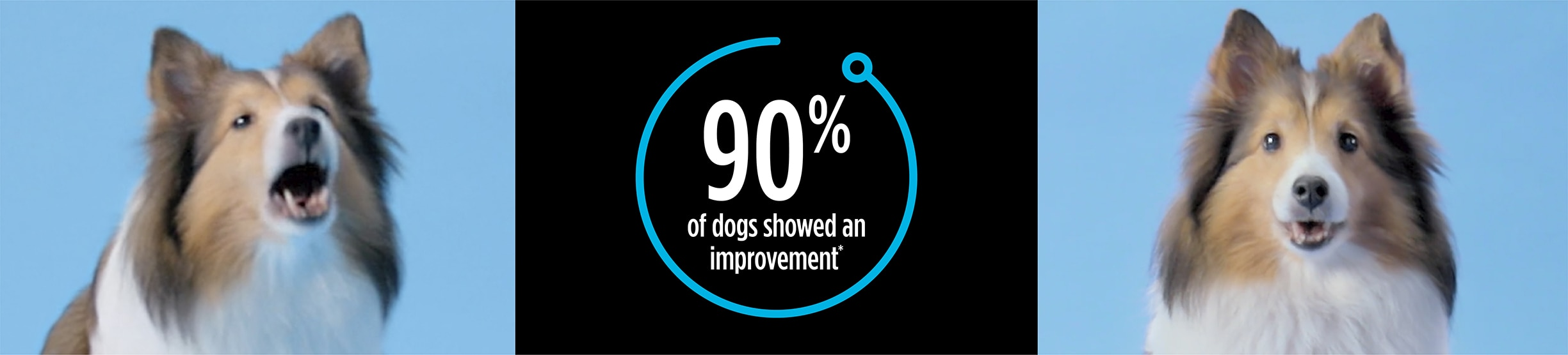 Is Your Dog Displaying Anxious Behaviors?